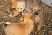 Домашний зоопарк и  приют для животных «Mežavairogi»
